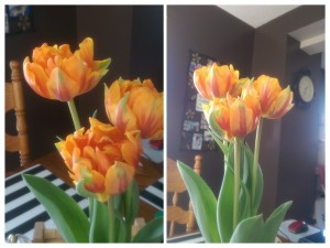 "Thea can also say, ""Flower"". Check out these beautiful and unique tulips my Mum gave me for Easter."
