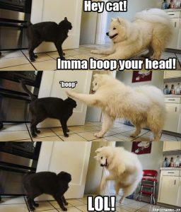boop cat